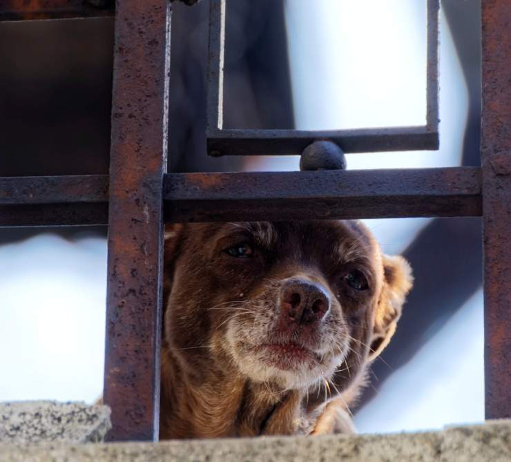 cagnolino lasciato balcone