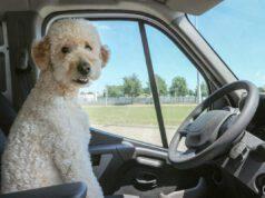 cane auto