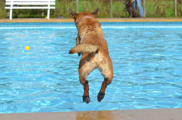 Cane si butta in piscina