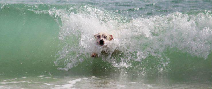 Il cane sta annegando