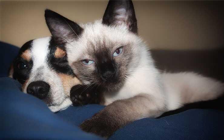 cane e gatto abbracciati (Foto Pixabay)
