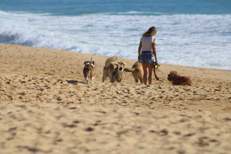 Un gruppo di cani con la padrona (Foto Pixabay)