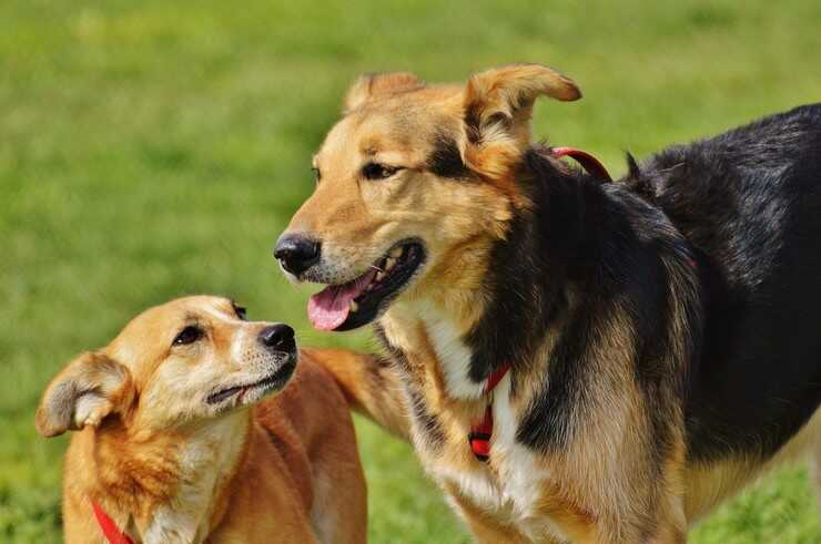 Cani al parco (Foto Pxhere)