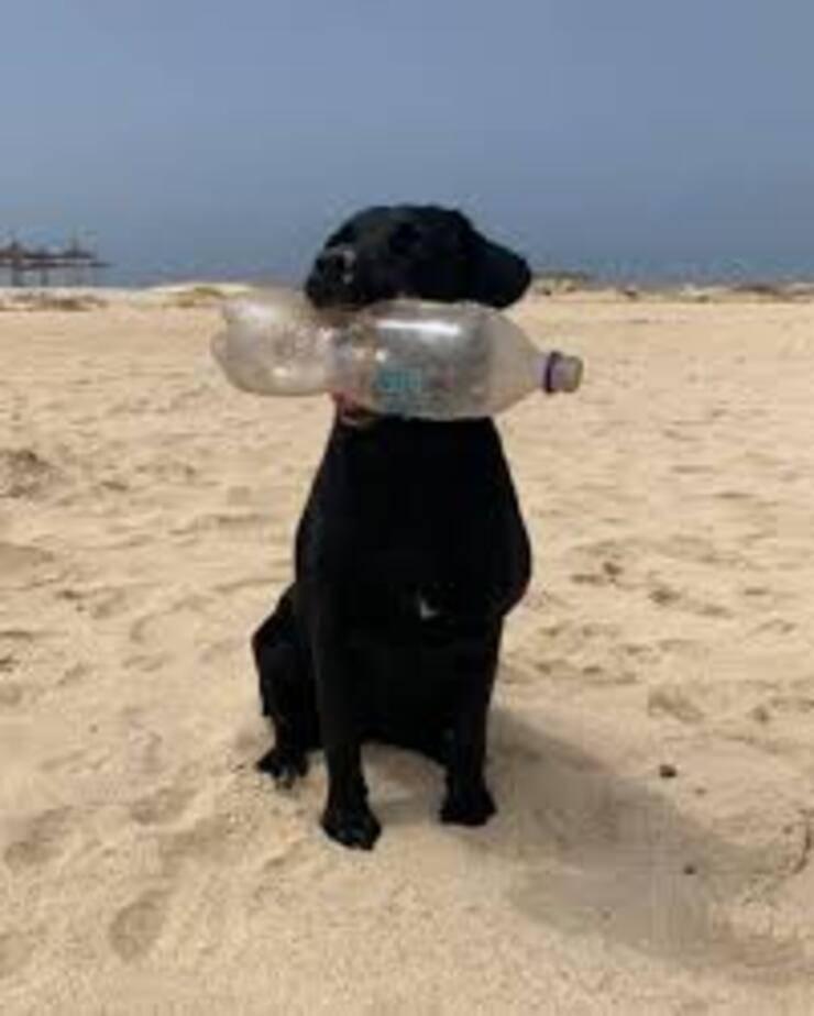 Alaska il cane che raccoglie la plastica