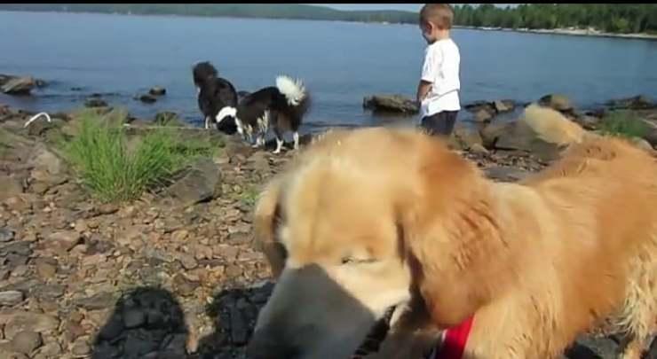 Un cane pieno di forza (Foto video)
