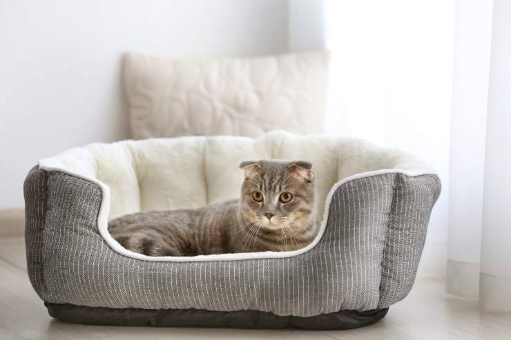cose essenziali per un gatto