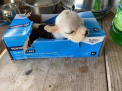 cucciola abbandonata scatolo