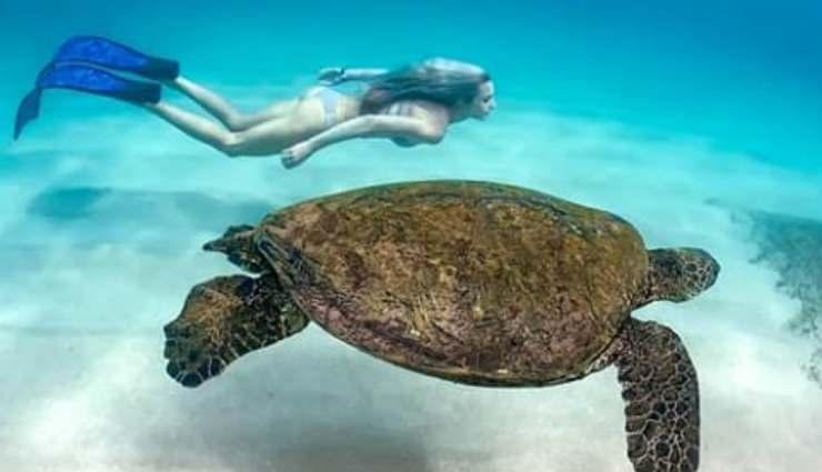 La modella e la tartaruga (Foto Instagram)