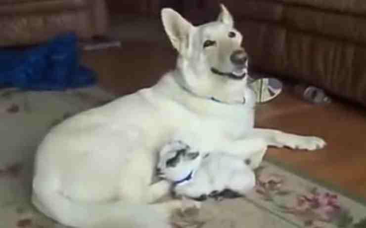la mamma adottiva (Foto video)