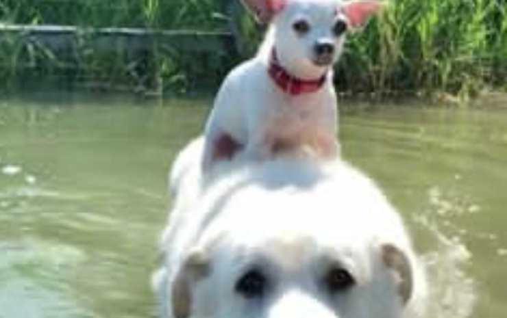 Il cagnolino e il cane (Foto Instagram)
