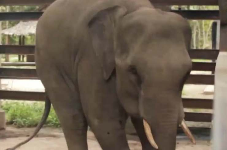 Elefante in primo piano (Foto video)