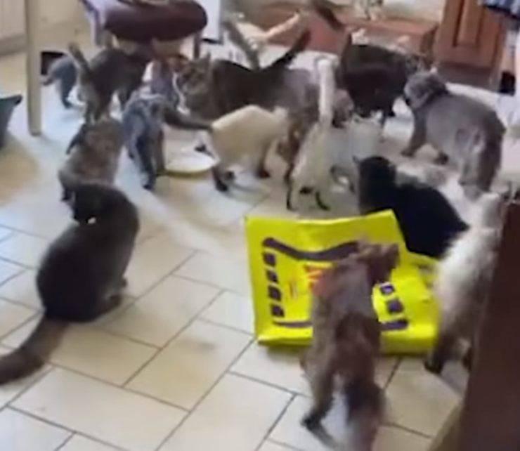 70 gatti