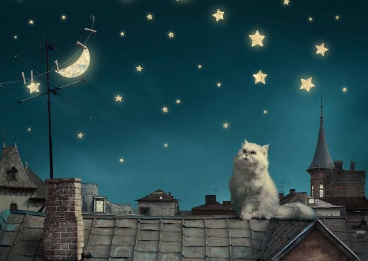 perché il gatto miagola di notte?