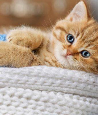 Malattie infiammatorie intestinali nel gatto