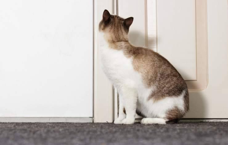i gatti sentono la mancanza del loro umano