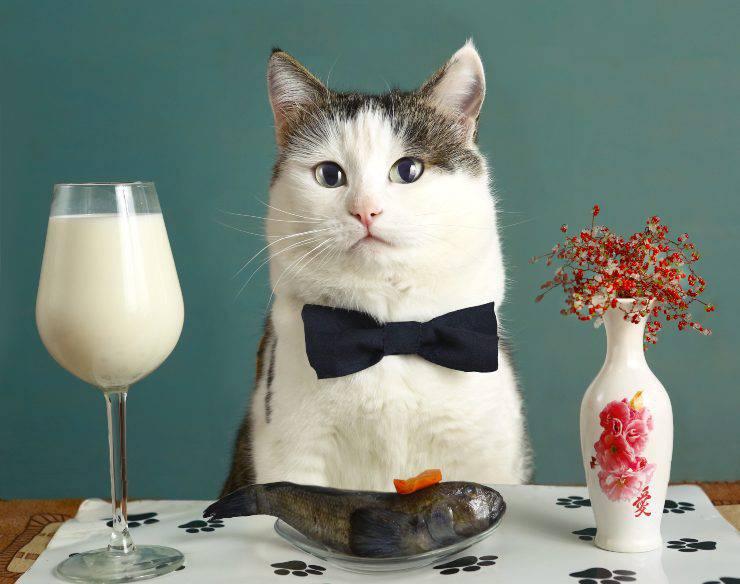 gatto a cena
