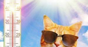 Il gatto suda