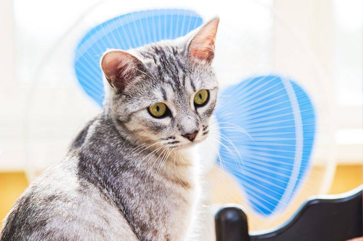 gatto e ventilatore