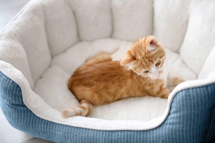 Come insegnare al gatto a dormire nella sua cuccia