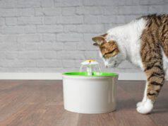 Come mantenere il gatto idratato