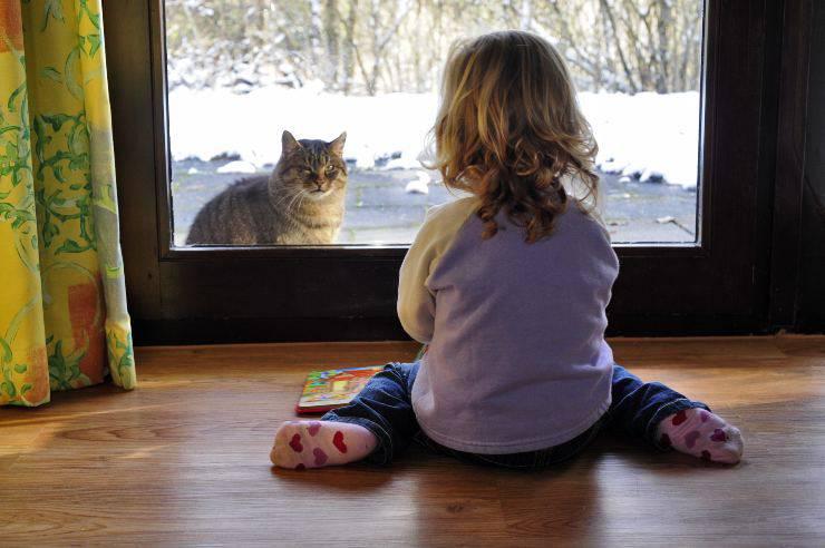 gatto fuori porta
