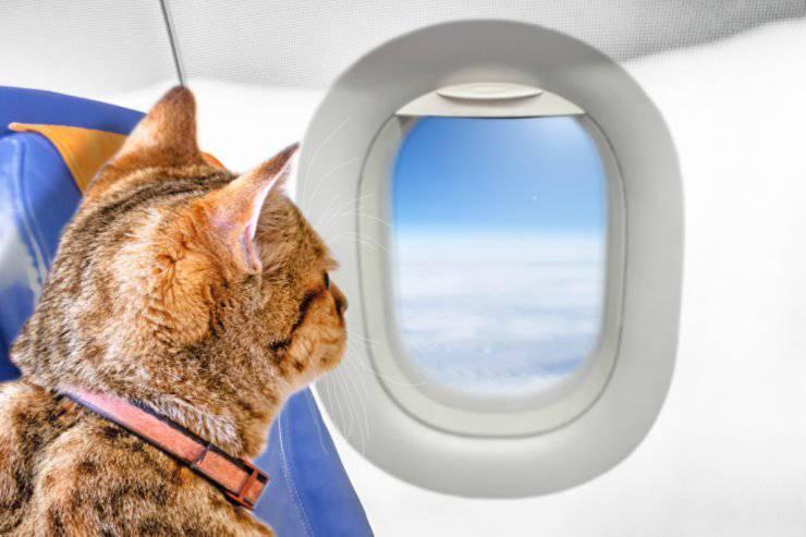 Viaggiare col gatto in aereo