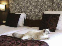 Gatto in albergo