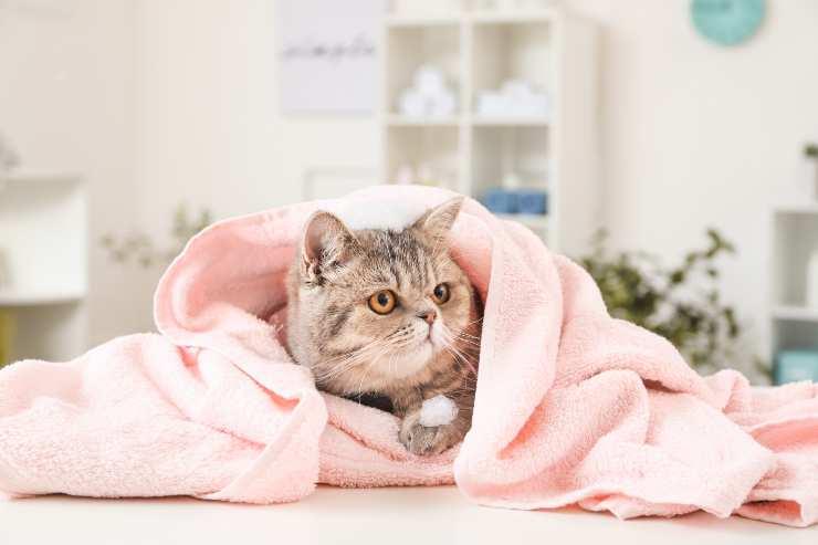 gatto nell'asciugamano