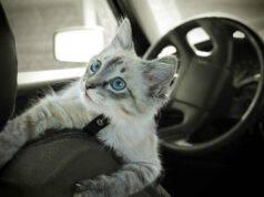 Viaggiare col gatto in macchina