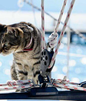 Viaggiare in nave col gatto