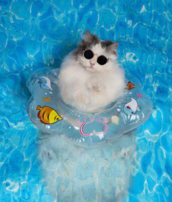 I gatti sanno nuotare