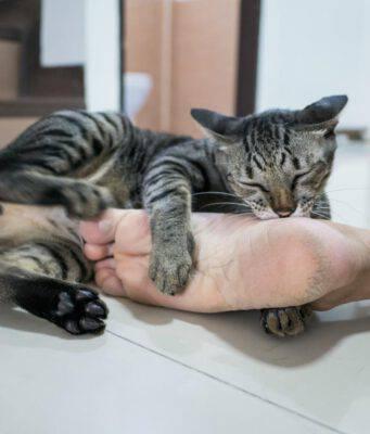 Il gatto morde i piedi