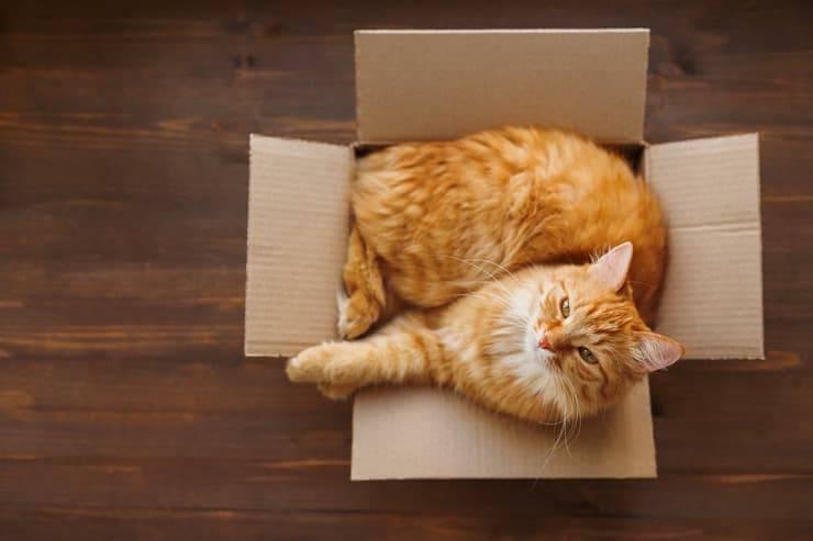 Quali sono le tipiche abitudini dei gatti? (Foto Adobe Stock)