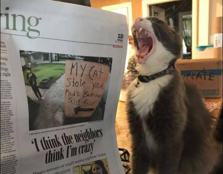 gatto ruba biancheria