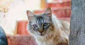test personalità il gatto sale o scende?