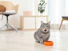 Perché i gatti scavano vicino alla ciotola