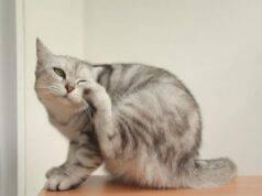 Allergie più comuni nei gatti