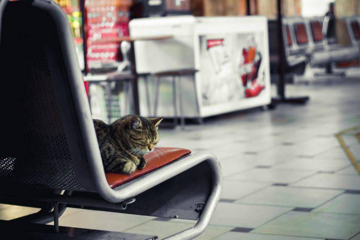 Gatto sul sedile