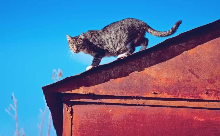 Perché i gatti si arrampicano sui tetti