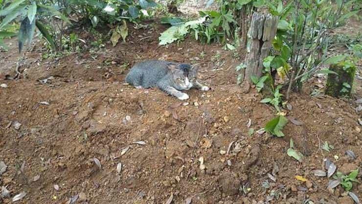 gatto cimitero