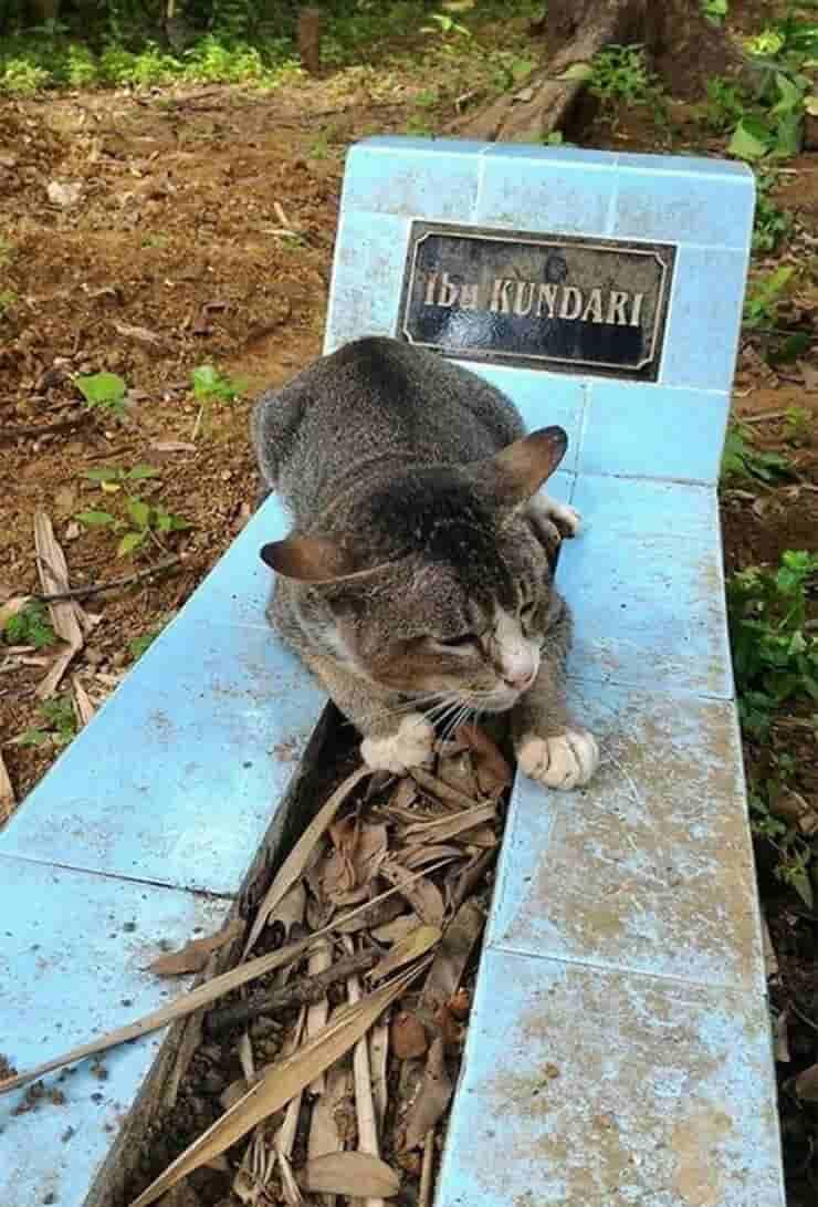 Il gatto veglia sulla tomba della proprietaria