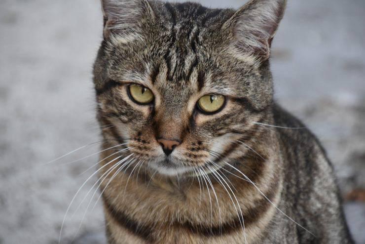 gatto con sintomi