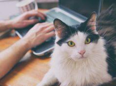 Capire la razza del gatto: come determinarlo, da razze miste a purosangue