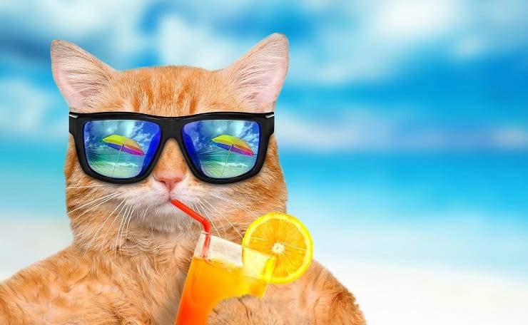 cosa può bere il gatto