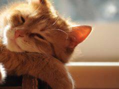 disidratazione del gatto sintomi