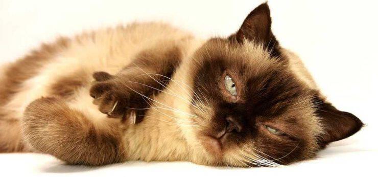 I 5 tipi di personalità del gatto