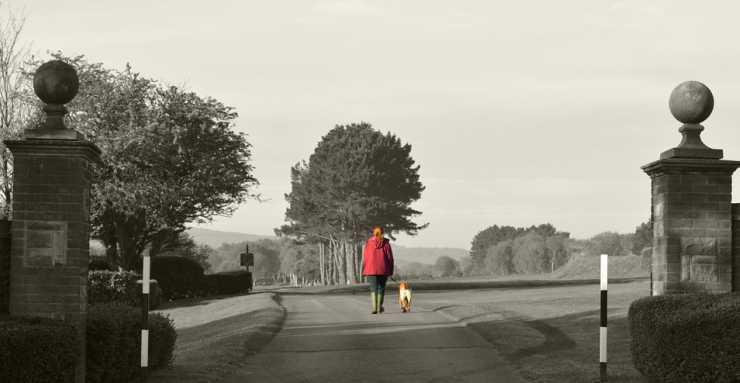 La padrona e il cagnolino (foto Pixabay)