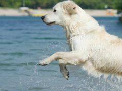Il cane nell'acqua (Foto Pixabay)