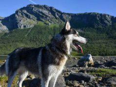 Cane al mare o in montagna