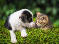 giornata mondiale conto il maltrattamento di animali